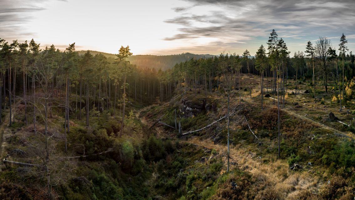 Provádíme multispektrální mapování a laserové skenování lesního porostu s výskytem kůrovce
